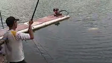 水库野生20斤鲤鱼,看老哥3分钟如何轻松搞上岸!