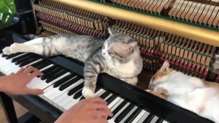 猫:换个曲子吧,朕要睡了