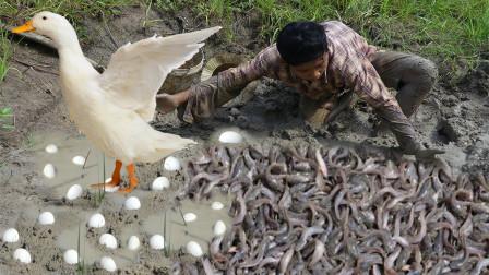 农民意外发现一堆大鱼,同时发现不明蛋类,这些大鱼估计有几千斤!
