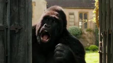 钢铁侠退休后找了个猩猩做他助手,这可比贾维斯笨多了!