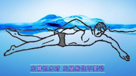 六张动图带你了解自由泳两次腿打腿时机