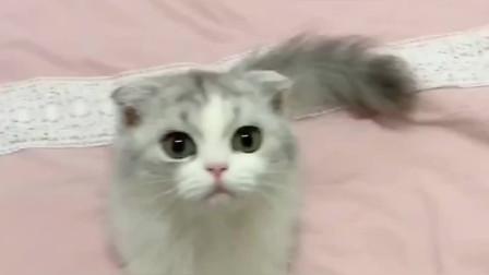 一只能听懂话的小猫咪