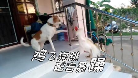 搞笑四川话动物配音,这才叫鸡飞狗跳,对上口型笑得肚儿痛!