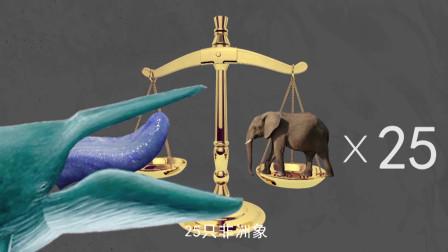 地球史上最大动物—蓝鲸!心脏就重一吨,堪称地球霸主!
