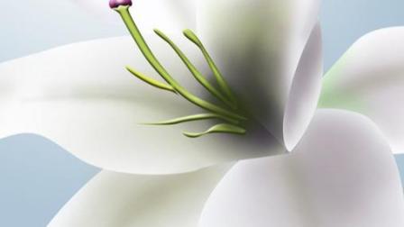 百合花语是什么