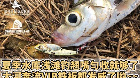 夏季水库路亚翘嘴就用VIB匀收就够了2020广东惠州阿芬来路亚X宽鳍路亚