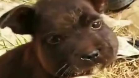 中华田园犬:你看我这包子脸可爱不,蜜蜂美容院做的