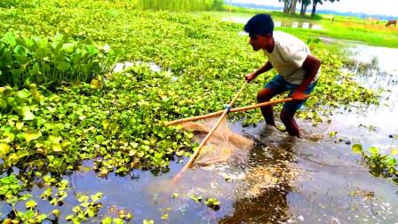 野外鱼多没人捕,小哥拿着传统渔网去捕捞,看看收获了多少?