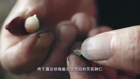 这种浑身长刺的植物成为肇庆人的小零食,瓦片上烘焙香脆可口