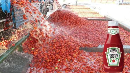 番茄酱是怎样生产出来的?看完加工全过程,你还敢吃么?