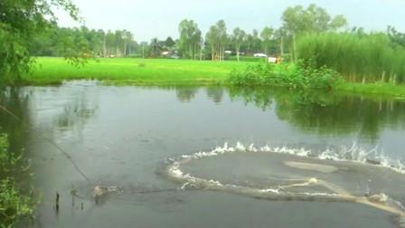 野外水塘无人管理,大哥一网下去,看看能捕获什么?