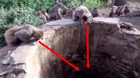 猴群围着枯井大吼大叫,村民往井里一看,瞬间不敢说话!