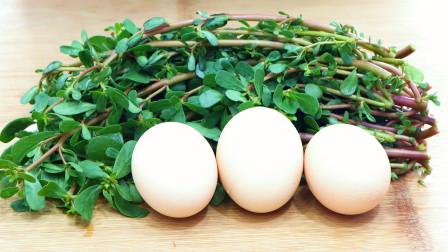1把马齿苋加3个鸡蛋,不炒不蒸不凉拌,简单一做,好吃到停不下嘴