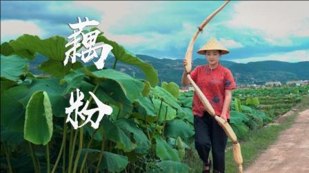 【滇西小哥】徒手挖十斤鲜藕,把云南夏日的荷塘美味做给家人吃