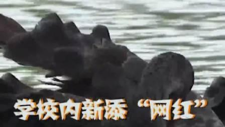扬州: 别人家学校的黑天鹅