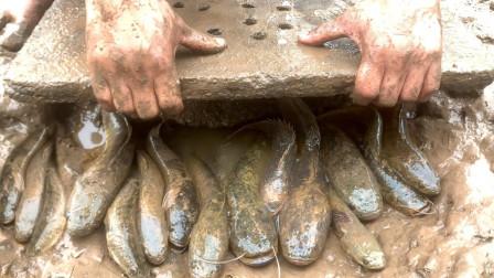 农村小伙在地里干活,掀开石板的那一刻,发现了许多大鲶鱼