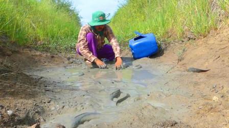 水渠断流干涸了,在水坑处发现好多黑鱼,大哥徒手抓得很过瘾!