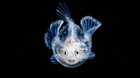 张帆:这些平平无奇的菜市场鱼,你很难想象它们小时候多美