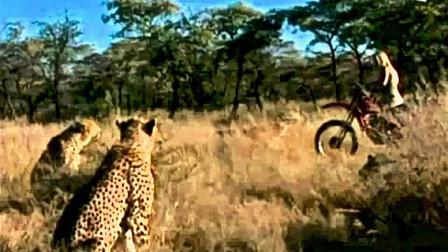 女子骑车路过草地,遭遇十几头猎豹围捕,女子的做法却让人意外