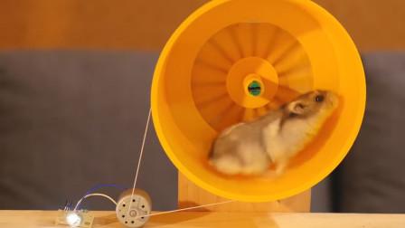 """主人测试用仓鼠发电,萌萌的小仓鼠,从此成为了""""发电机"""""""