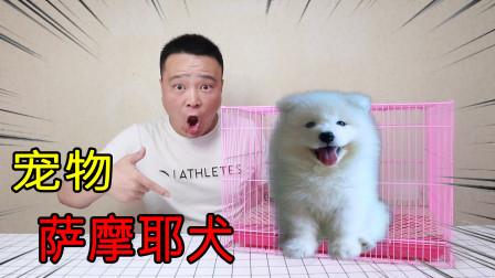 """小浪哥花700元开箱宠物""""萨摩耶犬""""这狗一见面和小旺财打起来了 !"""