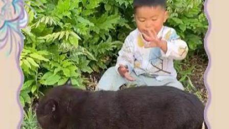 17斤的纯种黑色英国短毛猫与两岁半的侄子