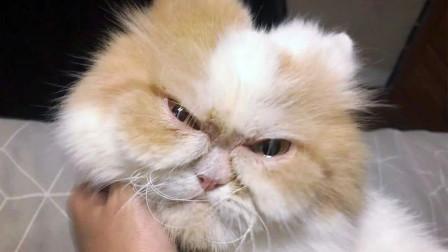 猫咪生气超难哄小情绪爆发莫挨老子