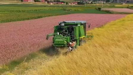 现在的农民太幸福,种地全都机械化,不用出大力了!