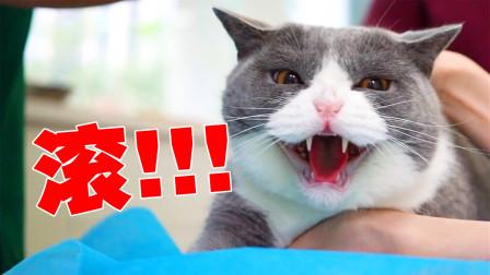 带五只猫打疫苗,猫一眼认出仇人,当场暴怒……