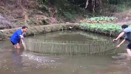农村大叔用最传统的方式捕鱼,没有鱼网就用竹子做个拦河网,太聪明了!