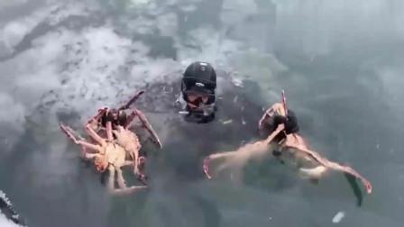 赶海:帝王蟹,看到这场景380一斤也不贵了,这是拿命换的,值!
