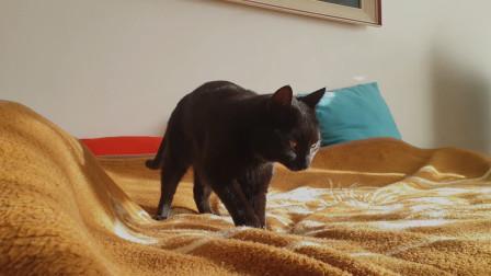 睡觉都要这么讲究的猫咪你见过吗