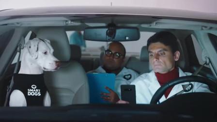 美国搞笑创意广告:开车的安全,需要智慧狗们来帮助