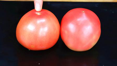 今天才知道,买西红柿要选母的,老农说漏嘴,以后再也不瞎买!