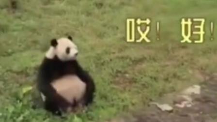 熊猫别想骗我我听得懂四川话的