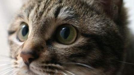 养宠物猫的需要注意什么