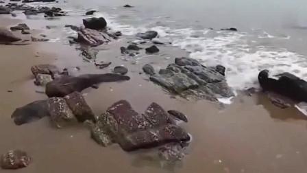 赶海:对螃蟹情有独钟,看见搁浅的海鱼都懒得抓