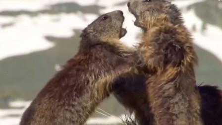 警惕!内蒙古巴彦淖尔市确诊一例腺鼠疫病例 当地发布鼠疫Ⅲ级预警