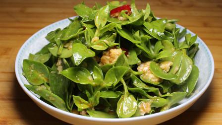 凉拌田七最简单的做法,活血化瘀营养美味,是养生的绝佳菜