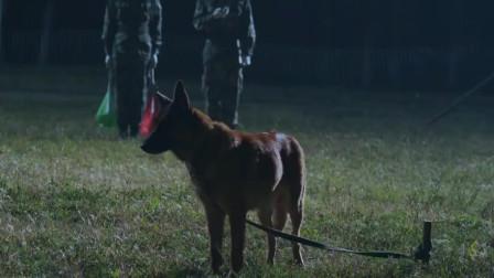 神犬奇兵:霍东和三人打赌训犬,结果三战全败,这下脸可丢大发了