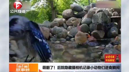 萌翻了!后院隐藏摄像机记录小动物们进食瞬间