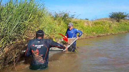 这样的捕鱼方法不多见,兄弟俩往河边水草下一捞,看看捕到了啥?