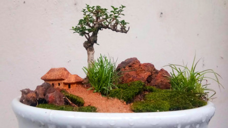 用菜盘子制作了一盆盆景,一棵小树苗、几块石头、几棵草,意境美