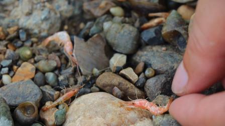 河虾被晒成干,钓鱼也空军,咱不服气河边石头也要挖走两袋!