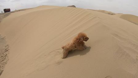 带着狗狗房车旅行,穿越柴达木无人区,沙漠里面泰迪犬玩嗨了