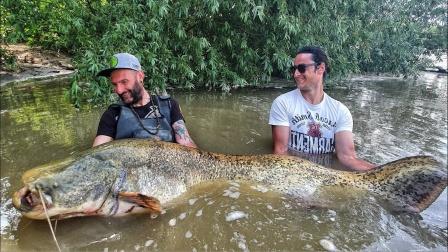 200斤重的大鲶鱼,被手指粗的杆活生生钓上来,钓鱼人绝对是大师