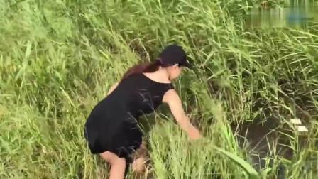 农村美女在水塘里摸鱼抓黄鳝,少说都有十几斤大货,赚大发了