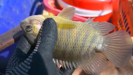 钓鱼:小的放生,大的拿回家