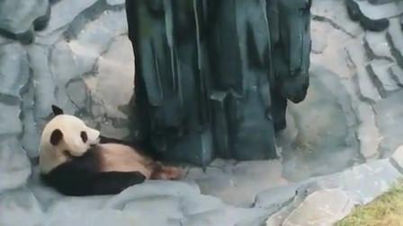 熊猫:放水也不说一声,把我吓一哆嗦