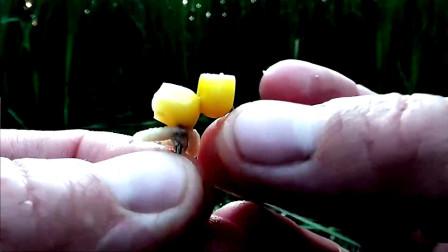 玉米粒搭配虫饵,就是钓鲤鱼的神器,连竿大鱼到手酸!